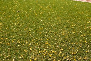 small leaves on surface of artificial lawn