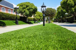 Artificial lawn installed at apartment complex lining walkway