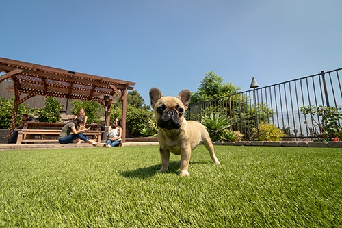 puppy standing on artificial turf lawn