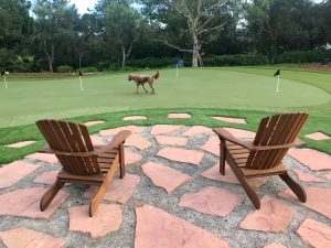 dog on putting green in front of lounge chairs